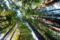 redwood, big sur, california, limited edition, fine art prints, forest, trees, photograph