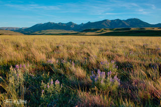 A moment of serenity | Wildflowers and Mountains