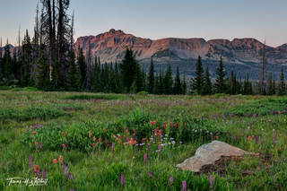 Summer Glow, Uinta Mountain Wildflowers