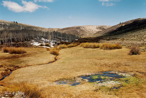 limited edition, fine art, prints, spring, utah, solder creek, aspen trees, snow, creek, photograph, pool, green, film