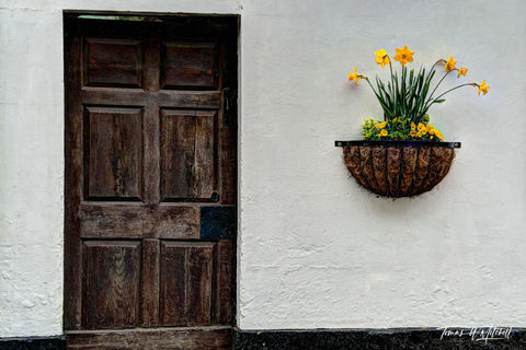 limited edition, museum grade, fine art, prints, photographing, flowers, doors, still lifes, door, image, daffodils, England, Cotswolds