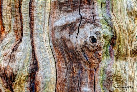 limited edition, museum grade, fine art, prints, photograph, ent, skin, sherwood forest, england, forests, trees, earth roots, seasons, old tree, forest, nottinghamshire, woodland, heath, ancient, mag