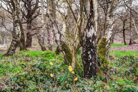 limited edition, museum grade, fine art, prints, photograph, entwives, sherwood forest, england, nottinghamshire, forests, tree, seasons, old trees, woodland, ancient, forest, graceful, moss