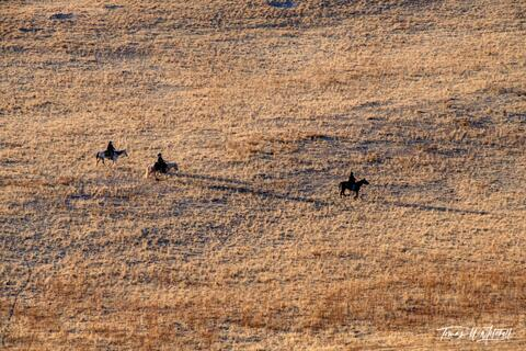 limited edition, fine art prints, antelope island state park, utah, white rock loop trail, home on the range, photograph, evening light, shadows, horse riders