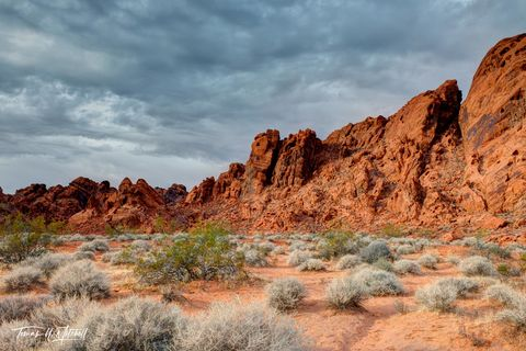 limited edition, fine art, prints, valley of fire, nevada, las vegas, state park, overcast, clouds, red rocks, cliffs, bushes, pink, sand, stormy, skies, overcast, photograph
