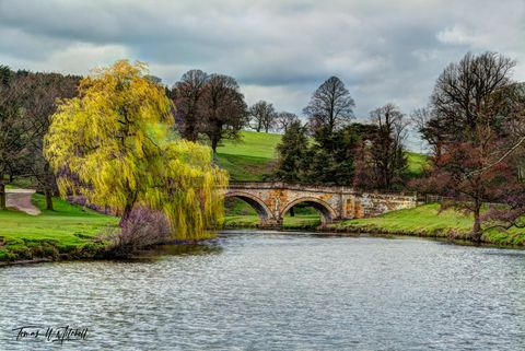 limited edition, museum grade, fine art, prints, willow, chatsworth house, england, derbyshire, trees, bridges, photograph, bridge, weeping willow, tree, river, derwent, springtime, branches, leaves,