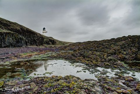limited edition, museum grade, fine art, prints, todhead lighthouse, lighthouse, marykirk, scotland, a92, stormy, coastline, moss, rocks, yellows, greens, reflection, water, gulls, mood