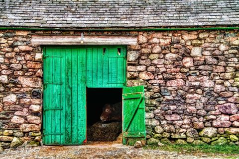 limited edition, museum quality, limited edition, prints, photograph, cow, wasdale head, england, lake district, photobombed, barn, door, scafell pike