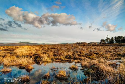 limited edition, fine art, prints, scotland, culloden, moor, battlefield, history, jacobite, scots, boggy, scottish, photograph