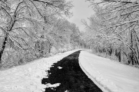 limited edition, fine art, prints, photograph, wheeler historic farm, utah, snow, pathway, path, trees, trunks, black and white, winter, silent series