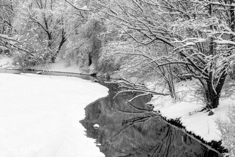 limited edition, fine art, prints, photograph, wheeler historic farm, utah, snow storm, contrast, black and white, stream, reflecting, water, winter, trees, silent series