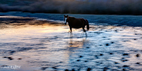 limited edition, fine art, prints, photograph, salt river, arizona, wild horses, abstract, blurred, sunset, horse, water, strider