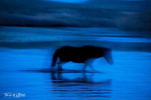 limited edition, fine art, prints, salt river, arizona, photograph, wild horses, abstract, blue, ghost, horse, fantasma azul,