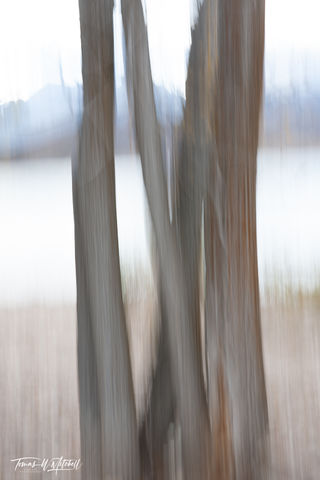 Deer Creek Trees Abstract #3