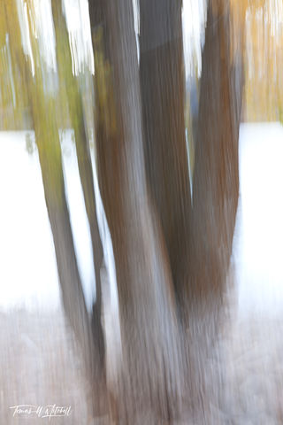 DEER CREEK TREES ABSTRACT #4