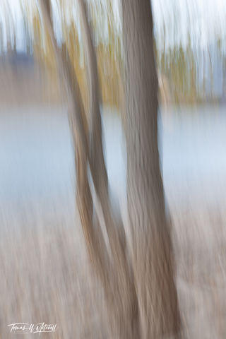limited edition, fine art, prints, deer creek reservoir, utah, pastels, photograph, grayish, brown, shoreline, blue water, tree trunks, yellowish, green leaves, mountains, trees, abstract