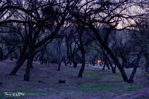 limited edition, fine art, prints, dusk, fire, salt river, arizona, USA, forest, sunset, campfire, photograph, blue hour, grass, trees, sky,