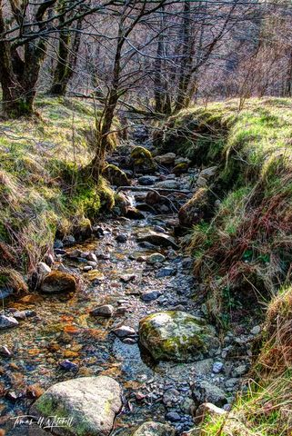 limited edition, museum grade, fine art, prints, glen coe, scotland, fairy, stream, sunlight, grass, branches, trees, water, nature