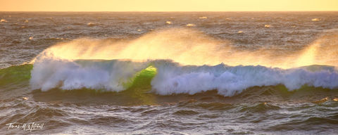 limited edition, fine art, prints, waves, asilomar beach, california, monterey, photograph, yellow, setting sun, spray, ocean, green, foam, panoramic