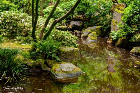 limited edition, fine art, prints, japanese garden, portland oregon, green, photograph, water, reflection, flower, fern, tree