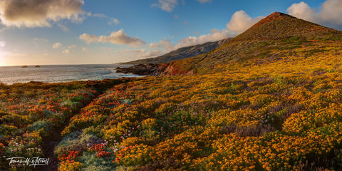 limited edition, fine art, prints, big sur, california, photograph, soberanes point, garrapata state park, wildflowers, panoramic, ocean, coastline, mountain