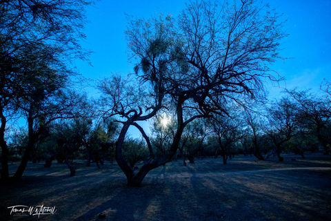 limited edition, fine art, prints, moon shadow, blue moon, photograph, tree, forest