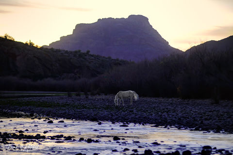 limited edition, fine art, prints, salt river, arizona, wild horses, abstract, blurred, sunset, spirit, photograph, horse