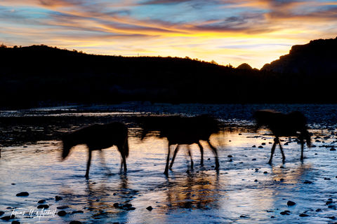 limited edition, fine art, prints, salt river, arizona, wild horses, mustangs, abstract, photograph, sunset, water, twilight, long exposure