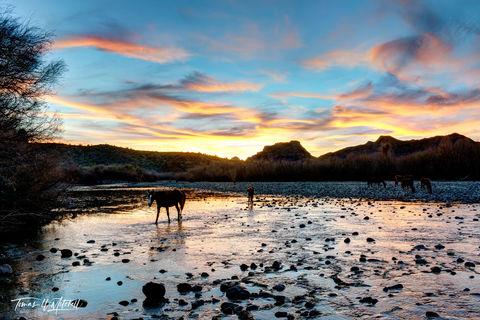 limited edition, fine art, prints, salt river, arizona, sunset, horses, photograph,