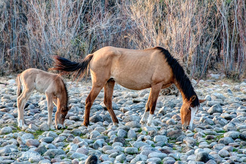 limited edition, fine art, prints, salt river, arizona, horses, mare, foal, photographing
