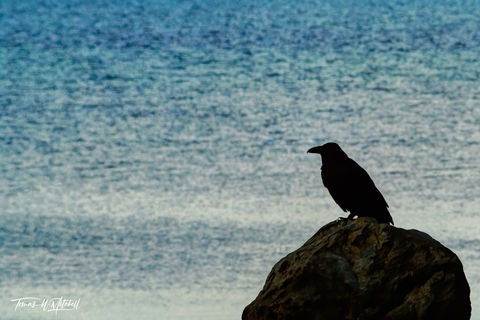 limited edition, fine art, prints, yellowstone national park, raven, rock, blue water, photograph, mythology,