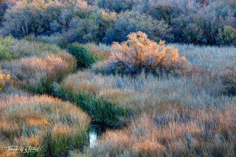 limited edition, fine art, prints, bill williams river, arizona, water, fall, lake havasu, sunrise, grass, bushes, yellow, green, blue, curving
