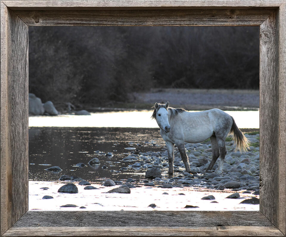 barnwood frame, collectors choice, photograph, open edition, pigment paper print,