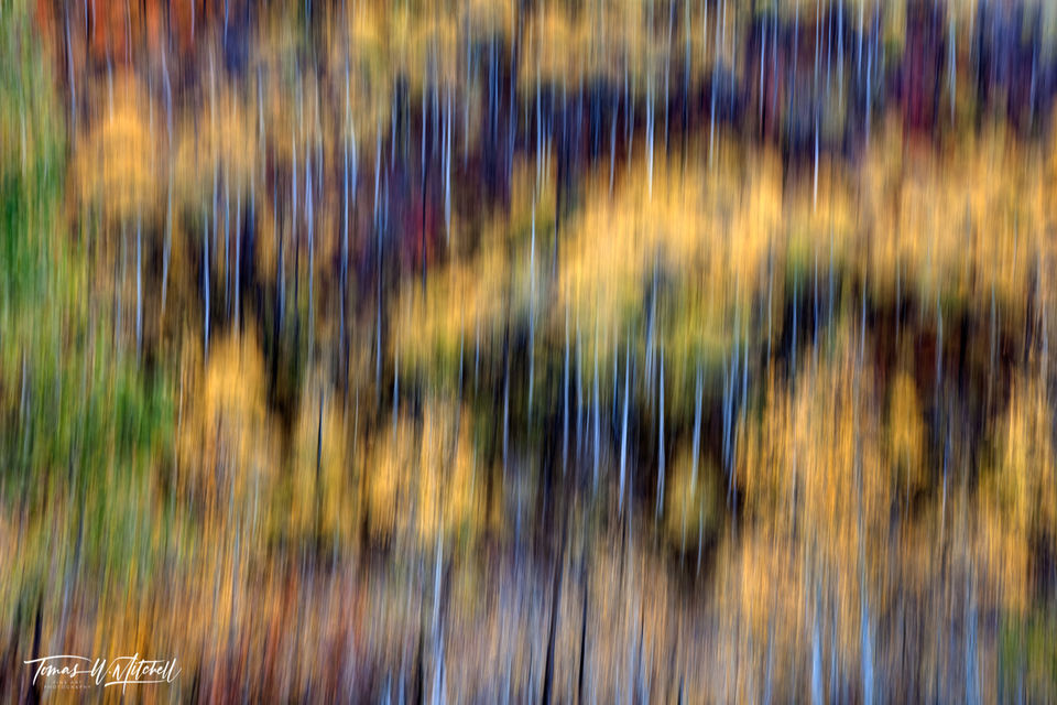 limited edition, fine art, prints, autumn, abstract, utah, wasatch mountain state park, photograph, icm, painted, colors, aspen tree, yellow, green, red, orange