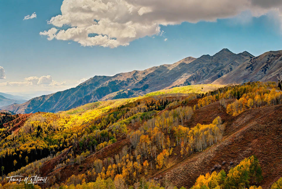 limited edition, fine art, prints, film, mount nebo, utah, fall, colors, aspen, trees, yellow, glow, photograph, golden, forest, towering, mountain, puffy, clouds, blue, sky