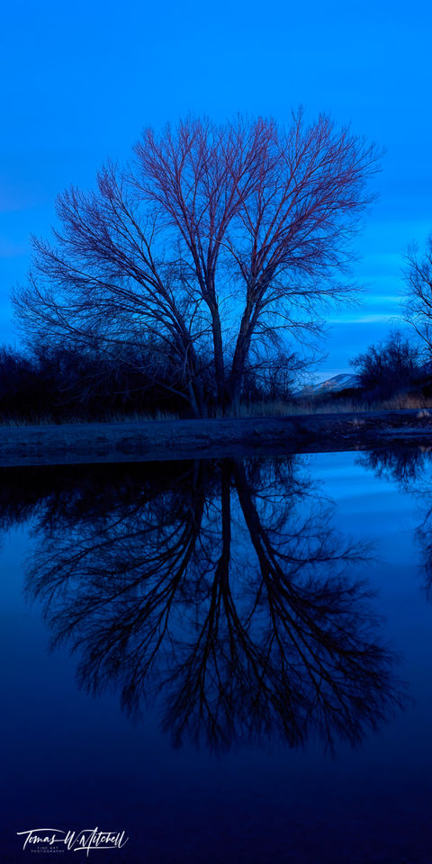 limited edition, fine art, prints, tree, blue hour, saratoga springs utah, reflection, photographing, stark, pond