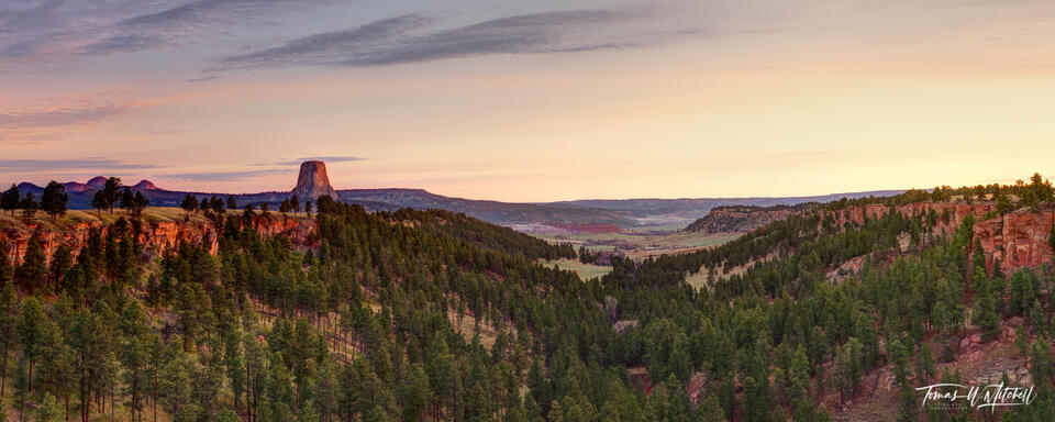 devils tower wyoming above the forest