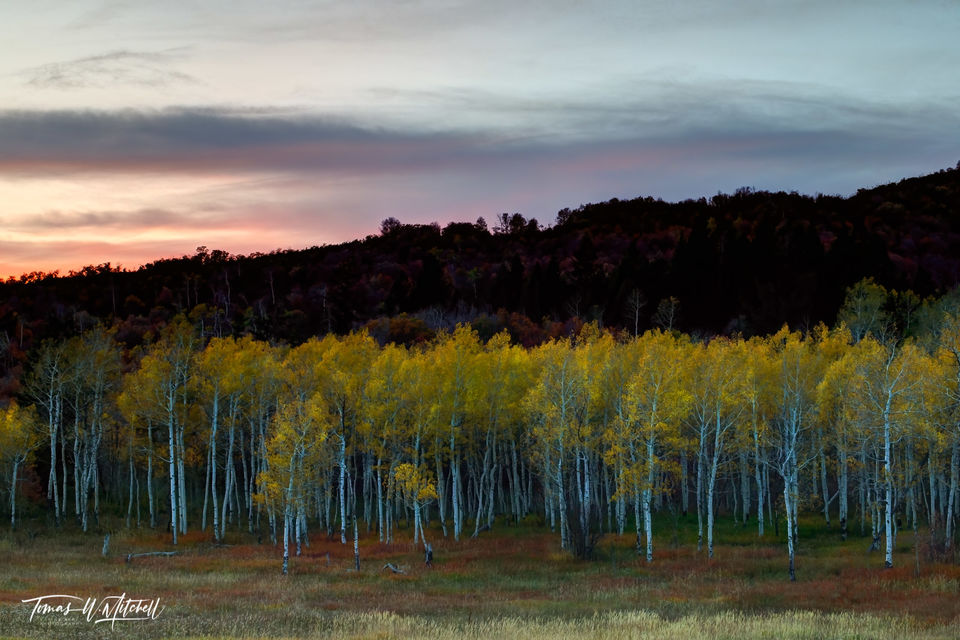 limited edition, fine art, prints, forest, trees, mood, enchanted, aspen trees, sunset, photograph, shades, color, dusk, leaves, grass, evening, yellow, red, green