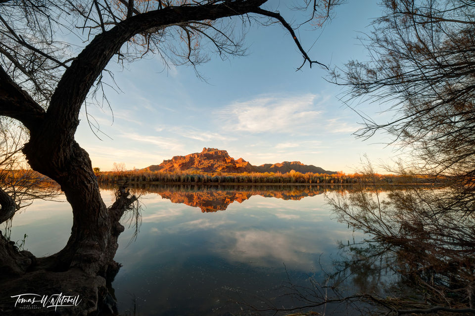 limited edition, fine art, prints, salt river, arizona, tree,  photograph, branches, red mountain, reflection
