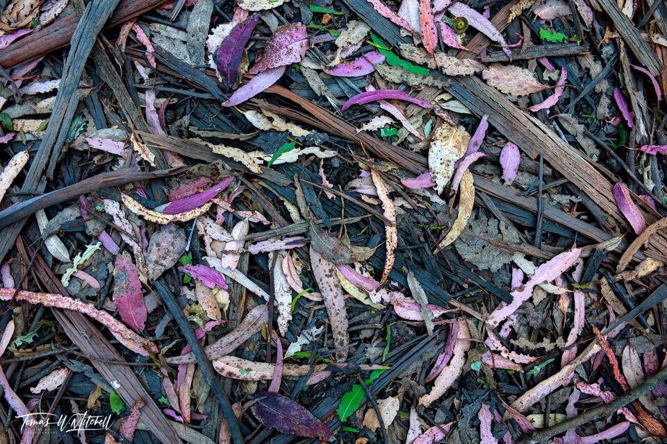 Gum Tree Debris