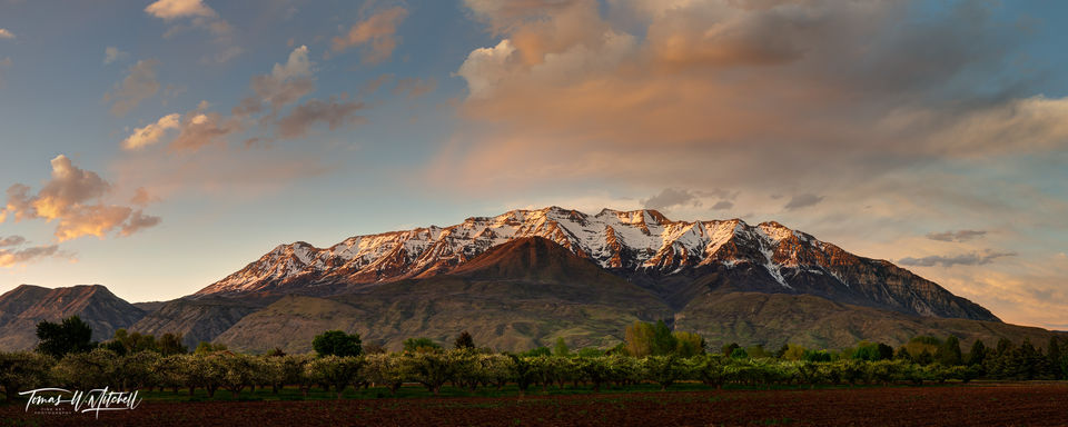 limited edition, fine art, prints, mount timpanogos, utah, mountain, springtime, timp, orchard, photograph, panoramic