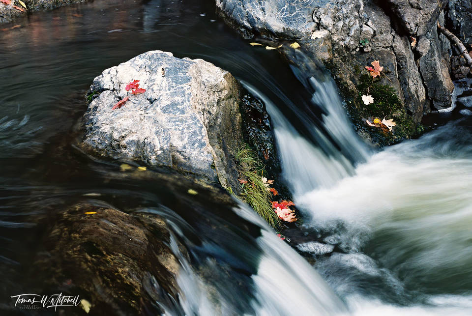 limited edition, fine art, prints, photograph, santaquin canyon, utah, creek, maple, trees, colors, leaves, stream, water fall, water, rocks, blurred, grass, rock