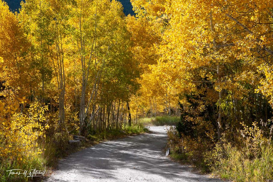 limited edition, museum grade, fine art, prints, golden, lane, alpine loop, utah, leaves, fall colors, photograph, afternoon light, autumn, aspen