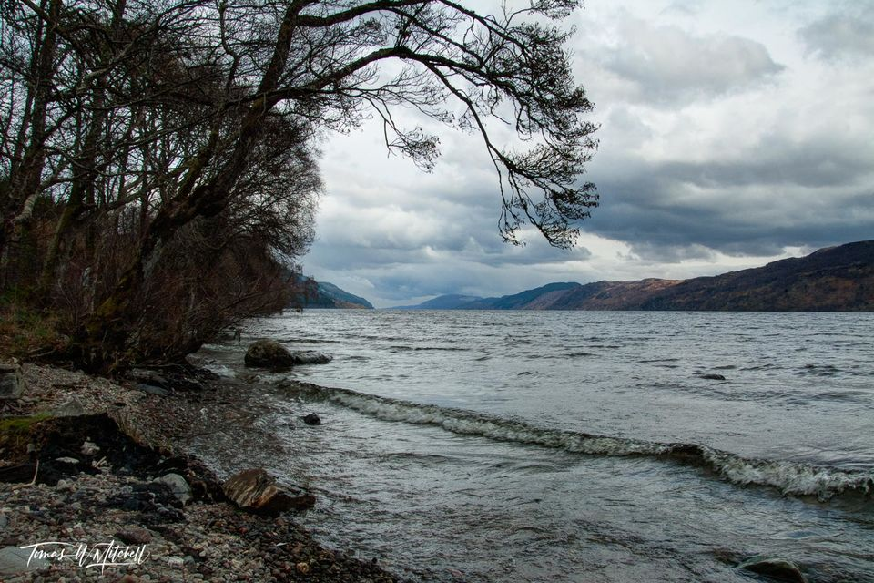 limited edition, fine art, prints, loch ness, scotland, inverness, tree, overcast, mood, mystery