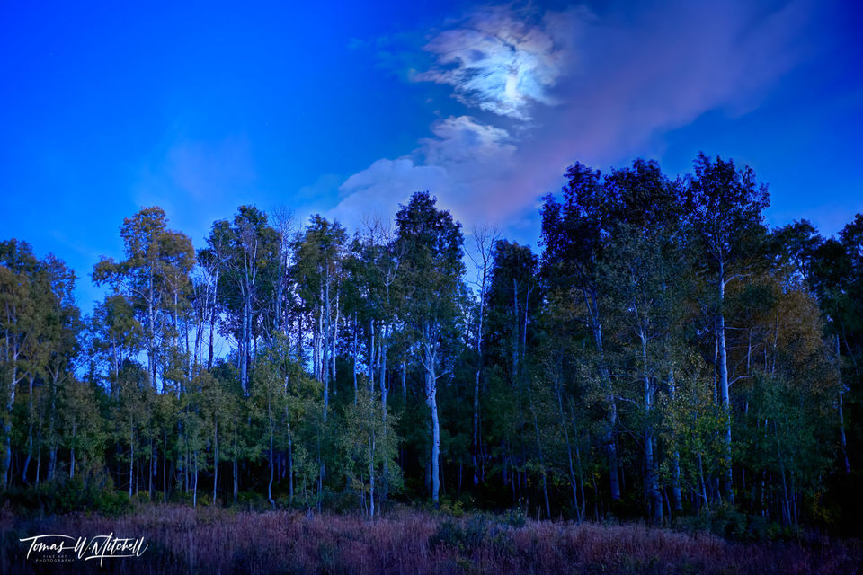 limited edition, museum grade, fine art, prints, moon glow, alpine loop, utah, moon, clouds, autumn, blue sky, forest, quaking aspens, leaves, red, yellow, photograph