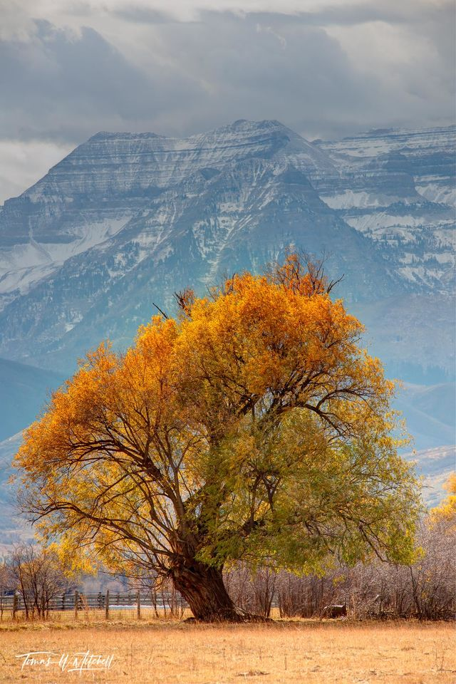 limited edition, fine art, prints, heber valley, utah, trees, mount timpanogos, black willow, field, nikor, fall, storm clouds, mountain, snow