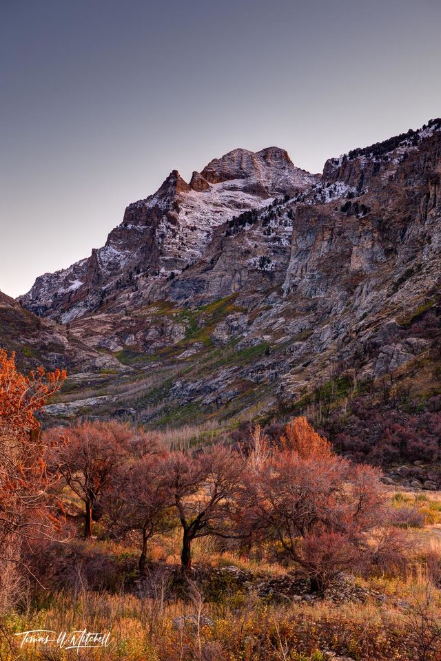 limited edition, fine art, prints, mount gilbert, nevada, humbolt national forest, photograph, burned, fire, yellow, red, sunset light, fall colors, mountain, snow, peak, trees