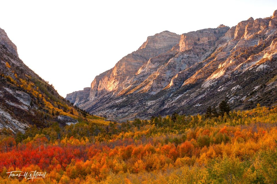limited edition, fine art, prints, lamoille canyon, nevada ruby mountains, canyon, cliffs, red, aspens, glow, groves, fall, autumn, october