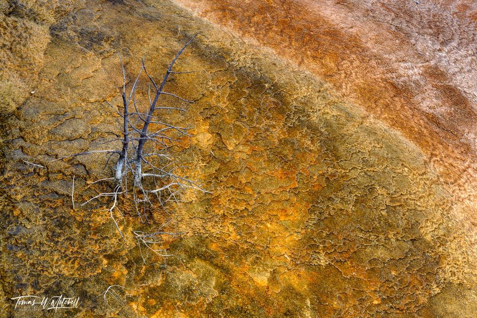 limited edition, fine art, prints, mammoth hot springs, yellowstone, wyoming, abstract, trees, mineral deposits, red, yellow, otherworldly, spirit, dance
