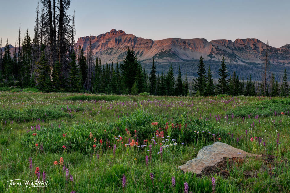 limited edition, fine art, prints, mountains, summer, wildflowers, uinta wasatch cache national forest, photograph, indian paint brush, daisy, hayden peak